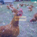 """La Blockchain dei """"polli"""""""